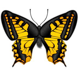 butterfly papillon