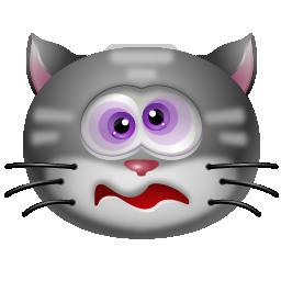 cat dizzy chat