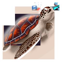 turtle tortue