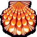 lyropecten nodosa coquillages