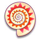 philippia radiata coquillages