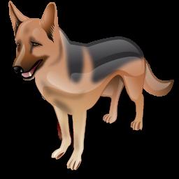 alsatian dog chien
