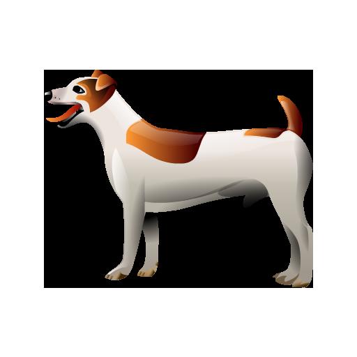 briliant animaux dog chien