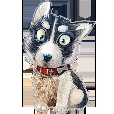siberian husky chien
