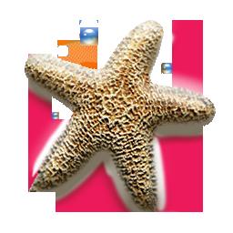 star 20 etoile mer