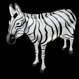 zebra zebre