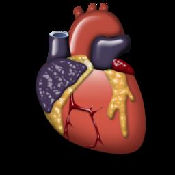 cardiology 2