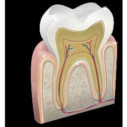 odontology 2