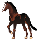 horse mustang