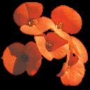 bouquet tiny orange