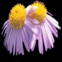 bouquet pompoms