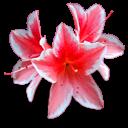 bouquet pinkwhite threes