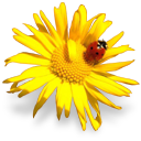 bouquet ladybug
