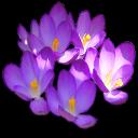 bouquet ascroci