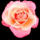 bouquet yellowcube rose