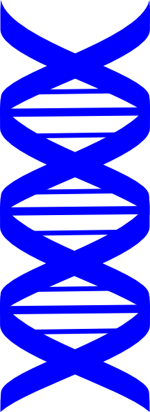 dna adn molecule brin 03