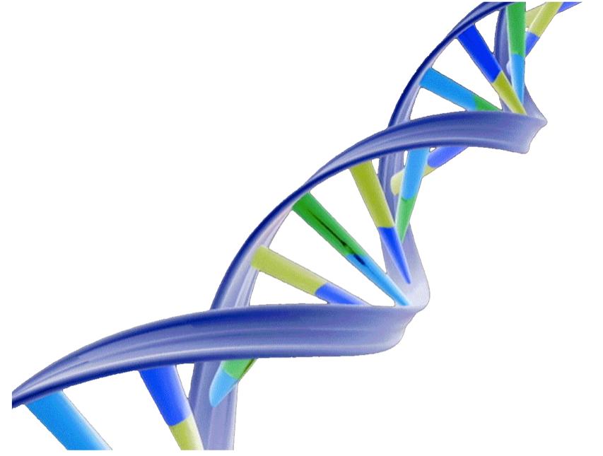 dna adn molecule brin 15