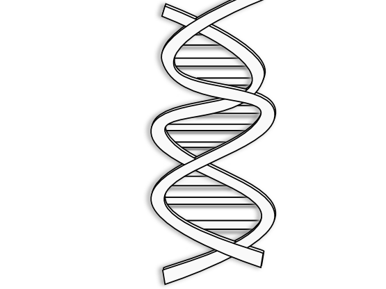dna adn molecule brin 02
