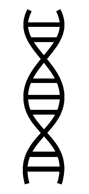 dna adn molecule brin 16