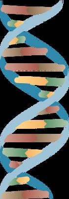 dna adn molecule brin 19