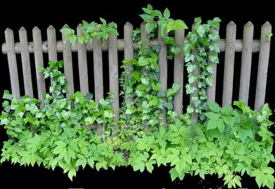 Barriere de jardin blanche meilleures id es cr atives - Chaises en plastique transparent ...