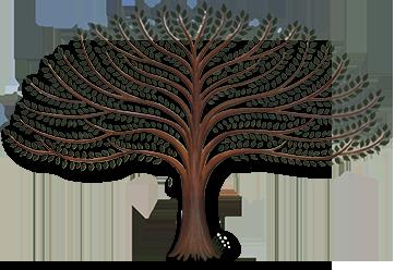 genealogie descendance 04