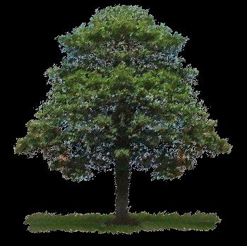 arbre genealogique descendance 01