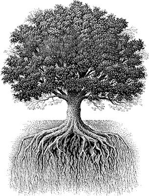 arbre genealogique descendance 04