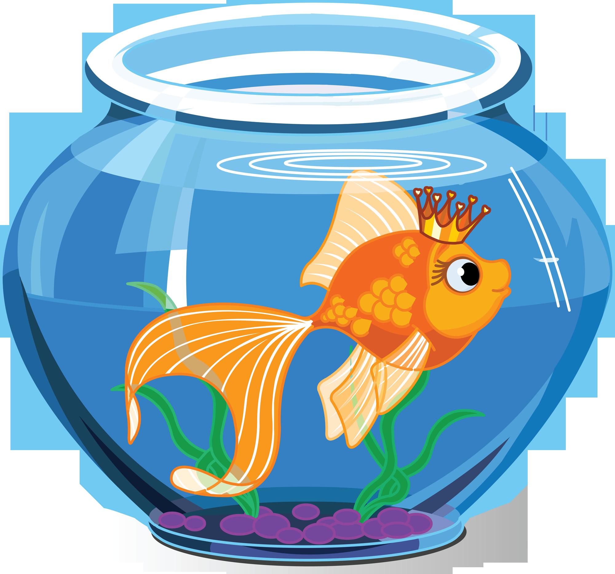 boule aquarium 7