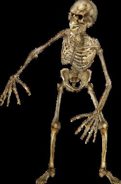 squelette 12