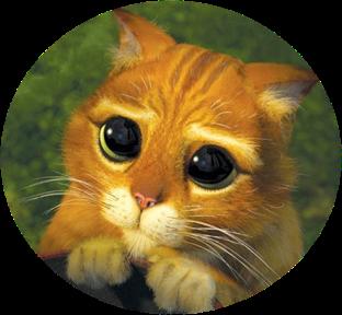 chat potte drole humouristique 2